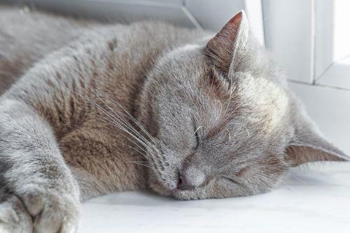 夢に出てくる猫の種類で夢占いの結果が変わります!20のケースを解説